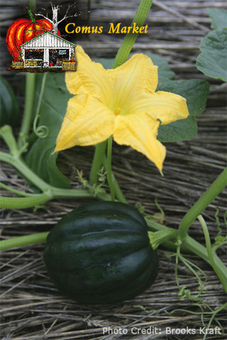 table ace acorn squash